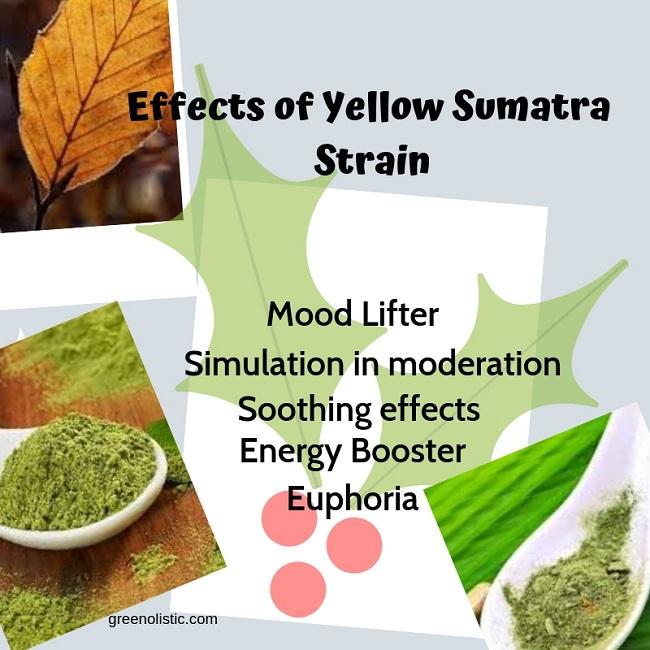 Effects of Yellow Vein Kratom (1)